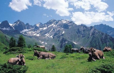 Kaunergrat Kaunertal Tirol