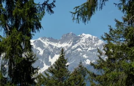 Braunebenwald